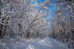 Zimy drogi krajobraz w śnieżnym lesie obraz stock
