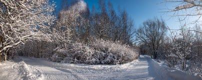 Zimy drogi krajobraz w śnieżnym lesie zdjęcie stock