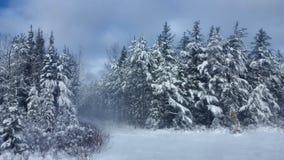Zimy Drogowa Śnieżna jodła, grzmot Podpalany Kanada zdjęcia stock
