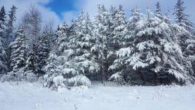 Zimy Drogowa Śnieżna jodła, grzmot Podpalany Kanada fotografia stock