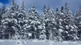 Zimy Drogowa Śnieżna jodła, grzmot Podpalany Kanada zdjęcie stock