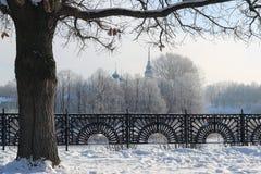 Zimy drzewa ogrodzenia kopuła Zdjęcie Royalty Free