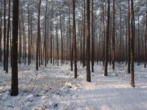Zimy drzewa Prążkowany pas ruchu Obraz Stock