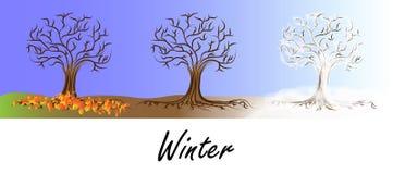 Zimy drzewa transformacja Ilustracja Wektor