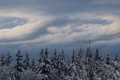 Zimy drzewa wierzchołki fotografia royalty free