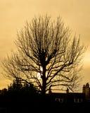 Zimy Drzewna sylwetka Przeciw zmierzchowi A Fotografia Royalty Free