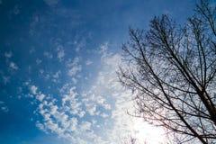 Zimy drzewo i Jaskrawy niebieskie niebo Zdjęcia Stock