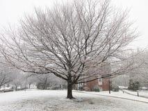 Zimy drzewo i okurzanie śnieg Zdjęcie Royalty Free