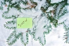 Zimy drzewo pod śniegiem w słońce promieniach Tło zakończenie zdjęcie royalty free