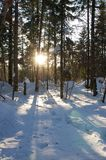 Zimy drzewo pod niebieskim niebem 6 Obraz Royalty Free
