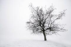 Zimy drzewo w mgle Fotografia Royalty Free