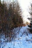 Zimy drzewo w polu Zdjęcie Royalty Free