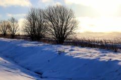 Zimy drzewo w polu Zdjęcia Royalty Free