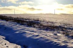 Zimy drzewo w polu Zdjęcie Stock