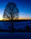 Zimy drzewo w zmierzchu Obrazy Stock