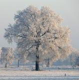 Zimy drzewo wschodem słońca Zdjęcia Royalty Free