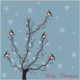 Zimy drzewo z uroczymi ptakami Fotografia Stock