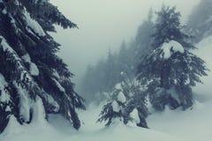 Zimy forestInstagram filtr fotografia stock