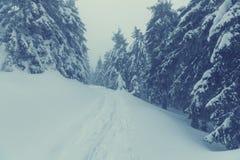 Zimy forestInstagram filtr obrazy stock