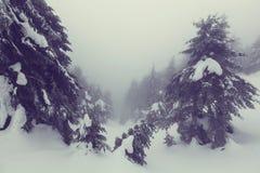 Zimy forestInstagram filtr zdjęcie royalty free