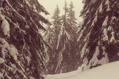 Zimy forestInstagram filtr obraz royalty free