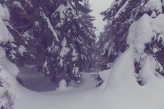 Zimy forestInstagram filtr fotografia royalty free