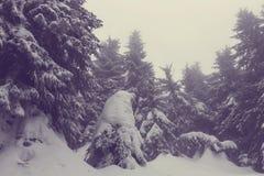 Zimy forestInstagram filtr zdjęcia royalty free