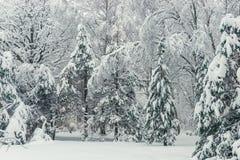 Zimy fotografia - horyzontalny zima krajobraz, jodły zakrywać obrazy royalty free