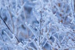 Zimy Frosy buziak zdjęcia royalty free
