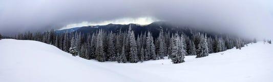 Zimy góry krajobraz z śniegiem zakrywał sosny c i depresję obrazy royalty free