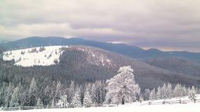 Zimy góry las