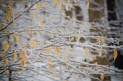 Zimy gałąź jesieni liście Obrazy Royalty Free
