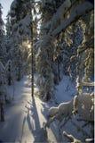 Zimy halna lasowa północ Urals10 Obraz Royalty Free