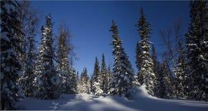Zimy halna lasowa północ Urals7 Fotografia Royalty Free