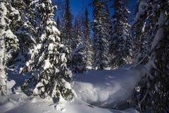 Zimy halna lasowa północ Urals14 Fotografia Royalty Free