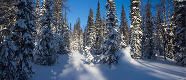 Zimy halna lasowa północ Urals6 Obrazy Royalty Free