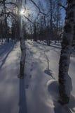 Zimy halna lasowa północ Urals12 Zdjęcie Stock