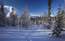 Zimy halna lasowa północ Urals15 Obrazy Royalty Free