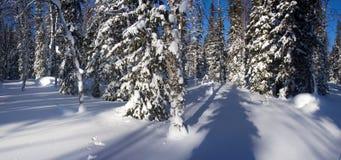 Zimy halna lasowa północ Urals8 Zdjęcia Royalty Free
