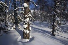 Zimy halna lasowa północ Urals11 Fotografia Stock