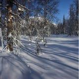 Zimy halna lasowa północ Urals1 Zdjęcia Stock