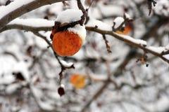 Zimy jabłko w drzewie fotografia royalty free