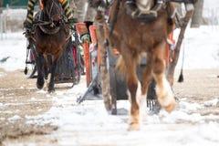 Zimy jeżdżenie na koniach zdjęcie royalty free