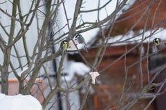 Zimy karmienia lasu ptaki obraz stock