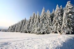 Zimy kraina cudów Obrazy Royalty Free