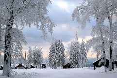 Zimy kraina cudów Obraz Royalty Free