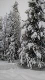 Zimy kraina cudów zdjęcie royalty free