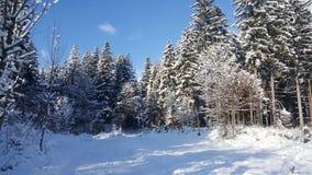 Zimy kraina cudów Obraz Stock