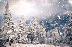 zimy kraina cudów - Bożenarodzeniowy tło z śnieżnymi jedlinowymi drzewami wewnątrz fotografia royalty free