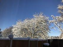Zimy kraina cudów przy bożymi narodzeniami Zdjęcia Stock